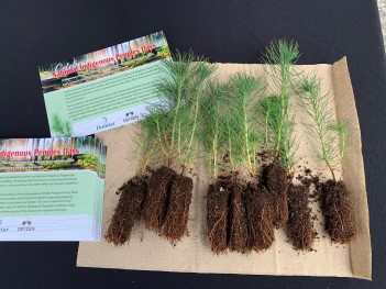 free seedlings encourage people to participate in carbon sequestration efforts